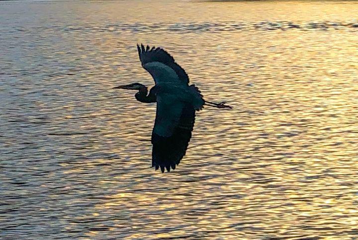 Flight - KrisDSimms Photography