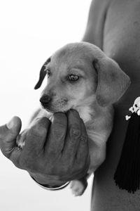 Handy Puppy