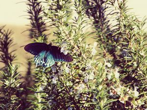 Catching My Butterfly