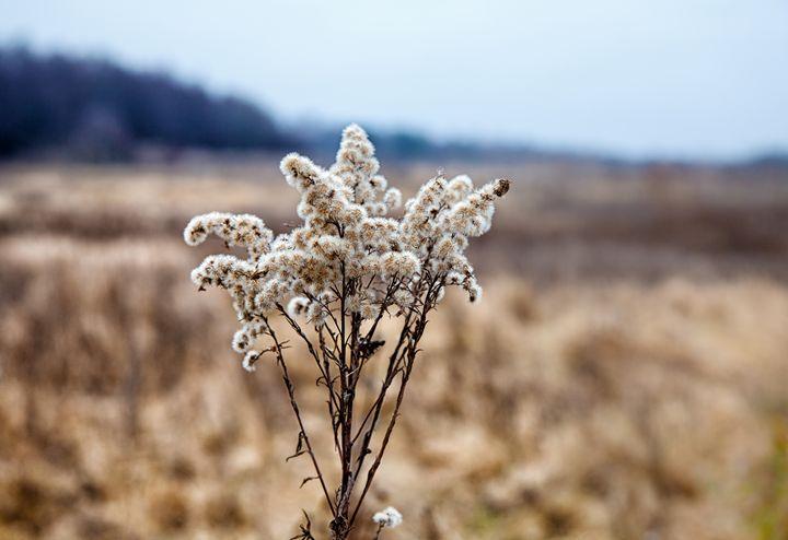 stem dried high grass in autumn - Radomir