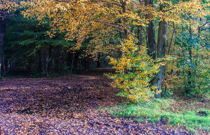 forest on autumn day - Radomir