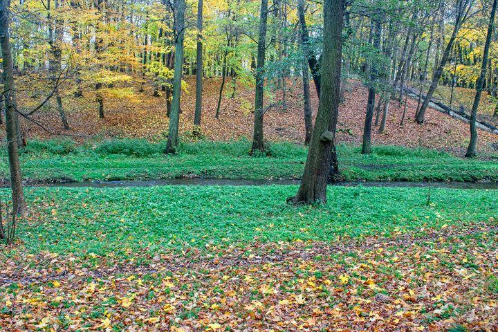 creek in the autumn forest - Radomir