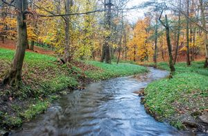 creek in the autumn forest