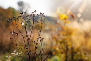 tall dry grass stem with cobweb in a
