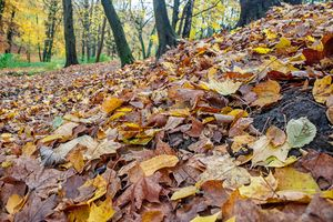fallen leaves in the forest on autum