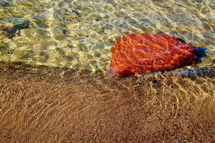 jellyfish near a large brown stone u - Radomir