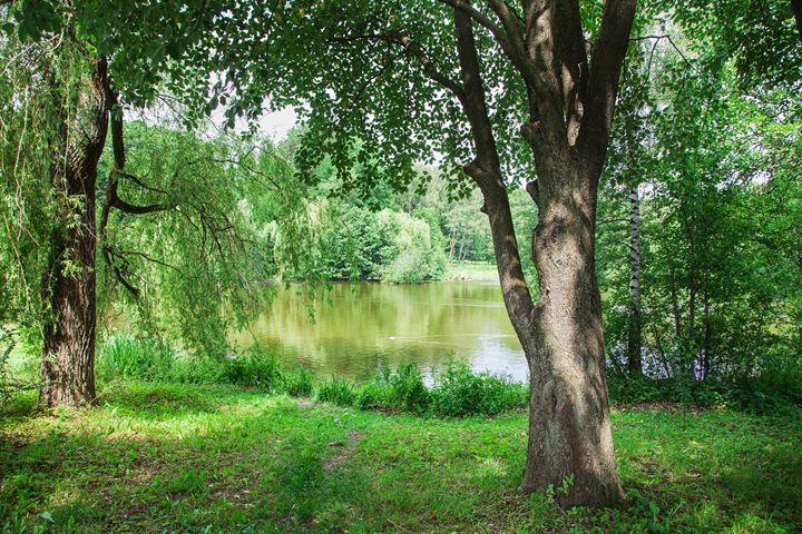 lake of the woods - Radomir