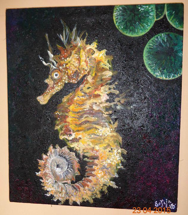 Seahorse Marko - Sofija