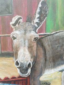 Very friendly donkey