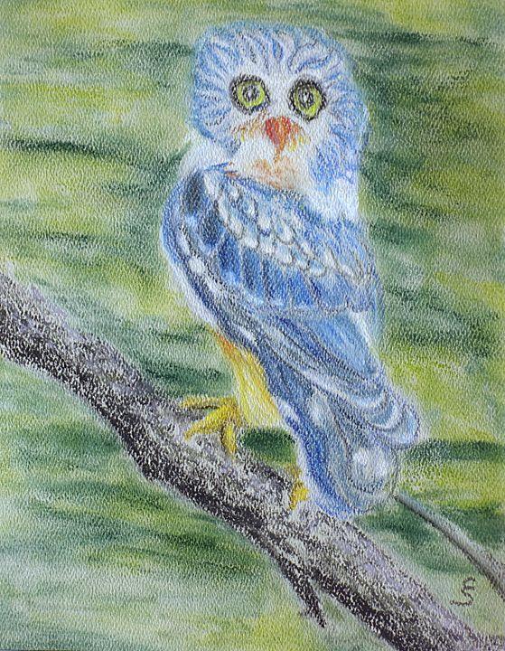 Blue Owl - Cynthia Sjoberg
