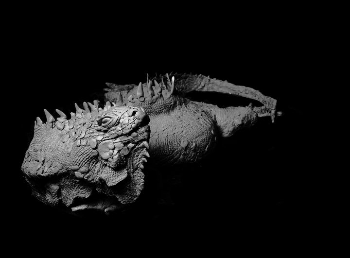 Lizard - Artropodo