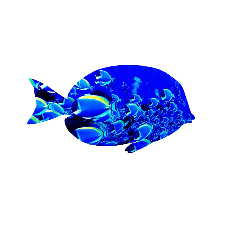 Fish - Wall Decor