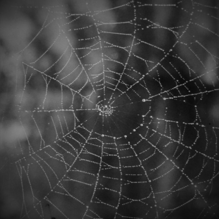 Web of the Morning - Jerry A. Puckett