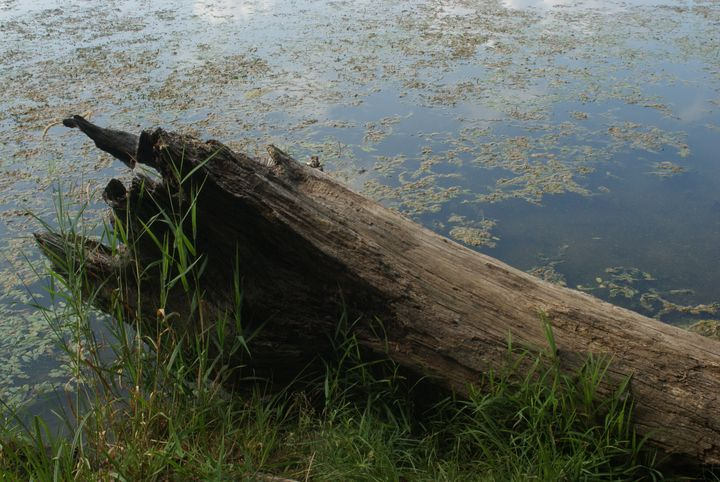 Wood, Water and Greenery. - Jerry A. Puckett