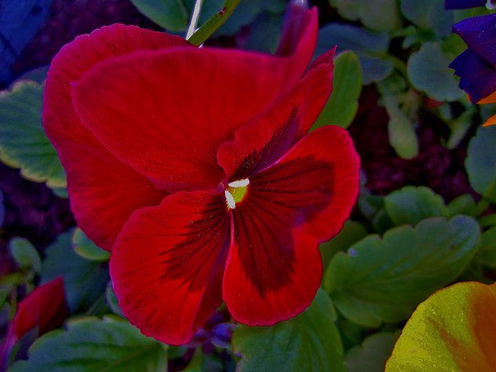 RED FLOWER - Art Galery