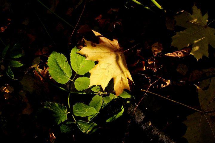 листья осени - Art Galery