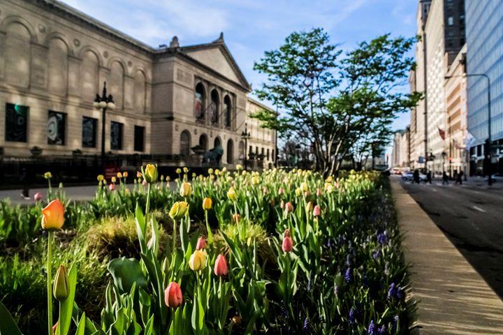 Chicago's Art Institute with tulips - Sven Brogren Photography