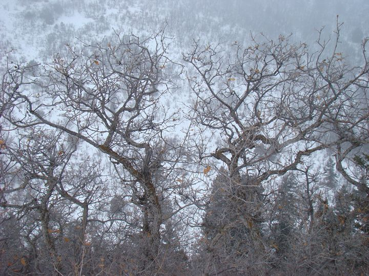 Winter Trees - Roxanne Morris