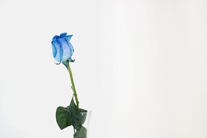 Blue rose - Claudia Ortiz