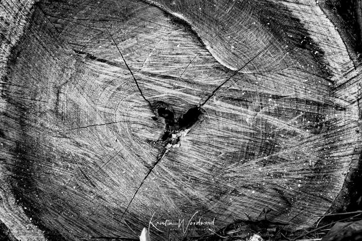 Log Heart - Kristin Woodward