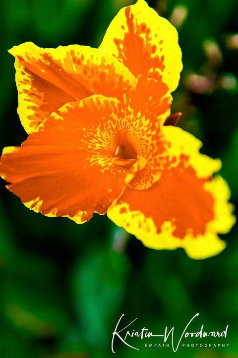 Promise Bloom Orange - Kristin Woodward