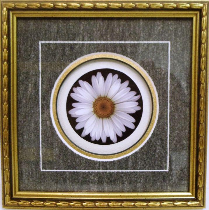 White Flower - The Frame Cellar
