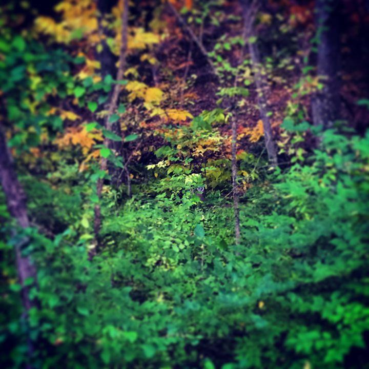 Green fall - Adam Bruns Art