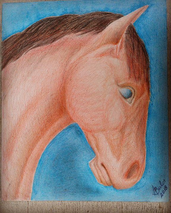 The horse - Adriatik Balos