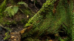 Stump - Max Ablicki - Adventure Photography