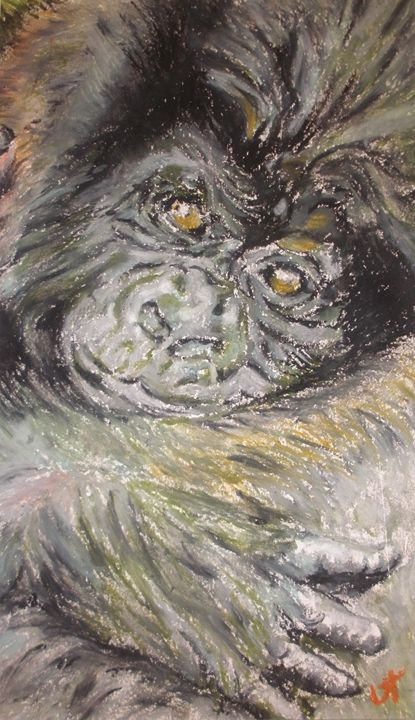 Baby Gorilla - UT