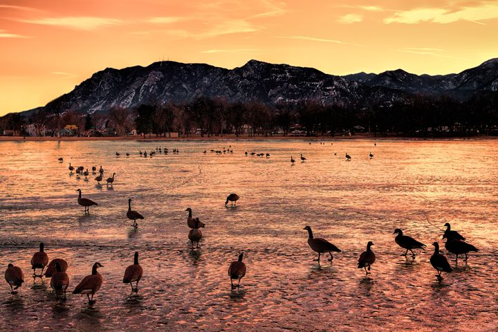 Ducks on a pond - Mike Sinko Photography