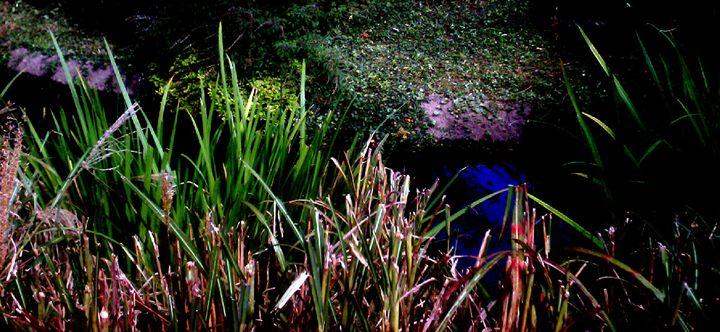 Pond - Unique Art