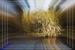 Cypress - Deb Potis Photography