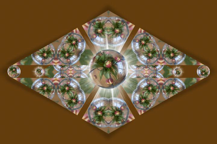 Springs a Poppin - Deb Potis Photography