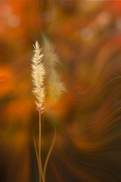 Autumn Grass - Deb Potis Photography