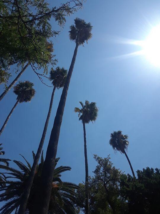 Palm trees - Double Topaz