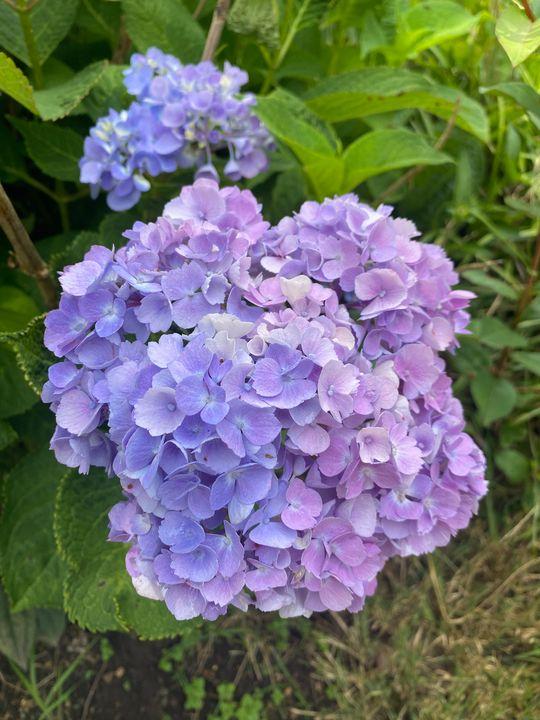 Purple dream - Beauty of Nature