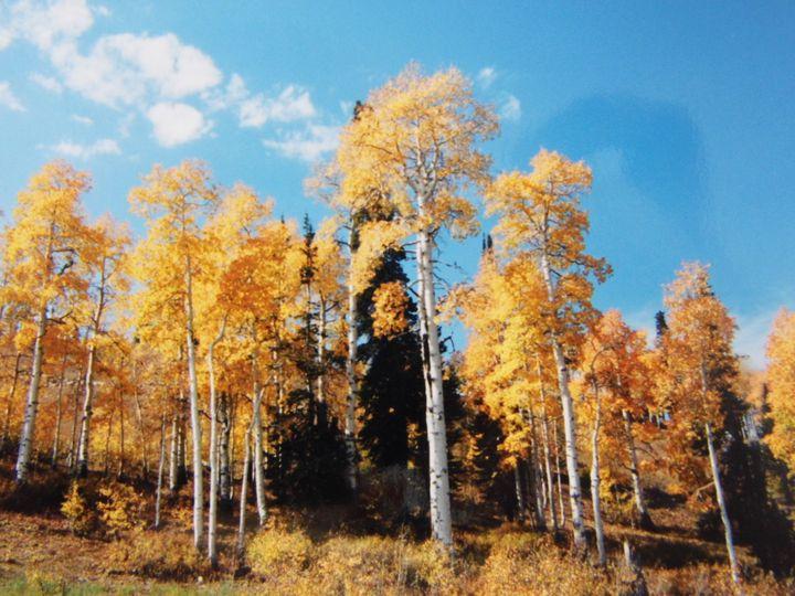 autumn glory in gold - Sunlight