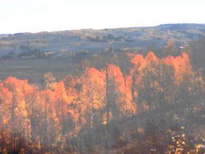 shine of fall season