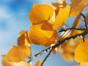 golden glowing