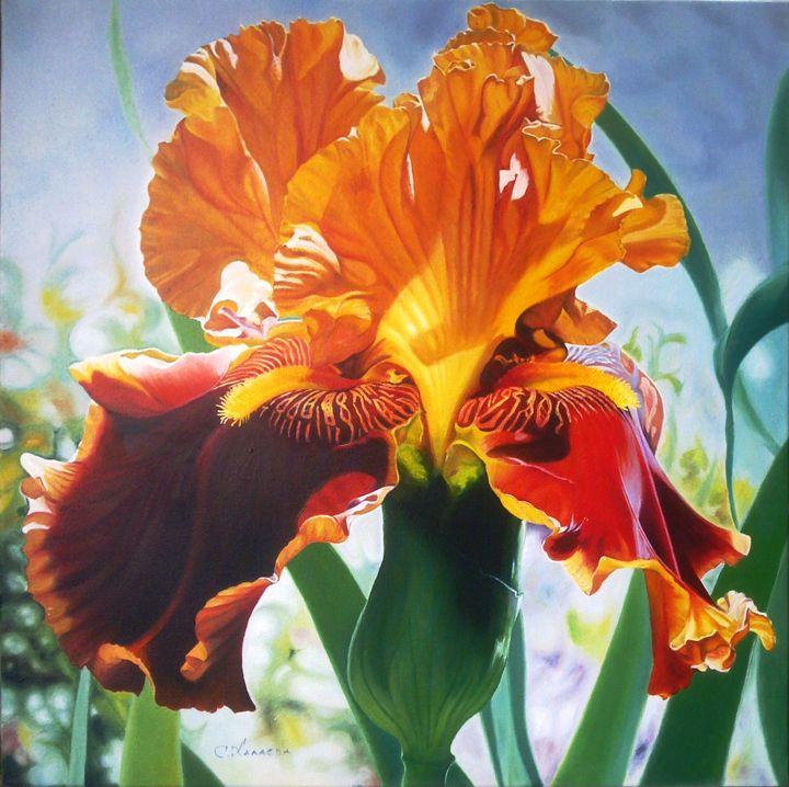 Iris in the sunshine - LOVE-ART