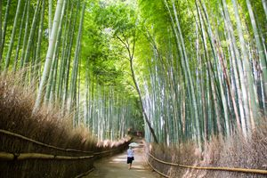 Stroll through the Bamboo Forest