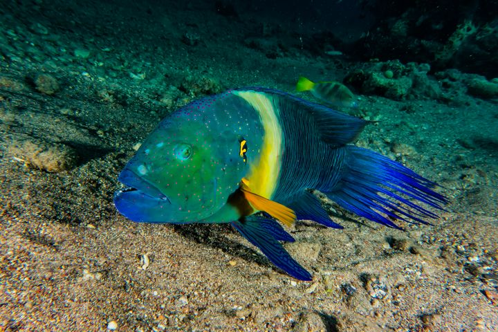Amazing Fish swim in the Red Sea - photo land