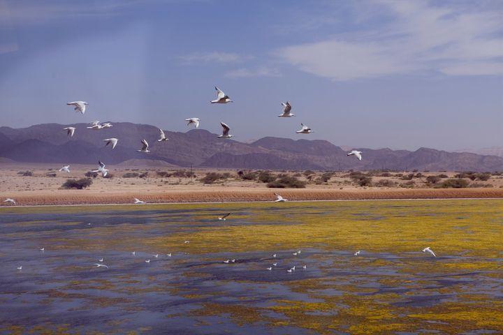 Amazing Landscapes of Israel - photo land