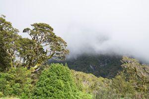 New Zealand rainforest - y.d