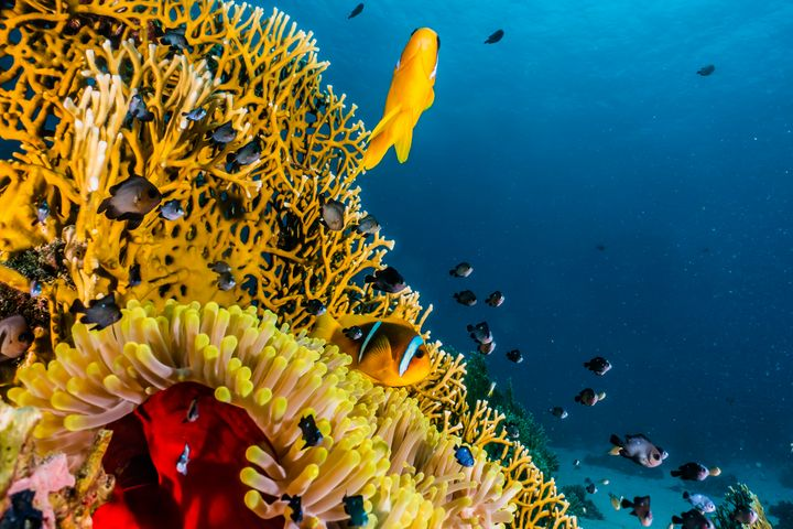 Coral reefs and water plants - photo land