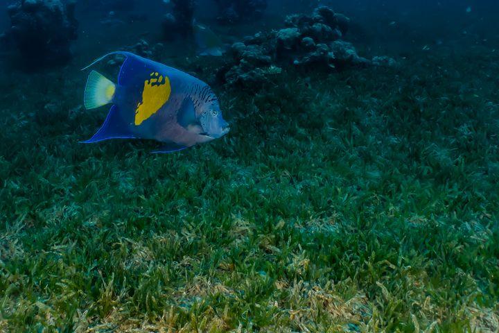 Fish swim in the Red Sea - photo land