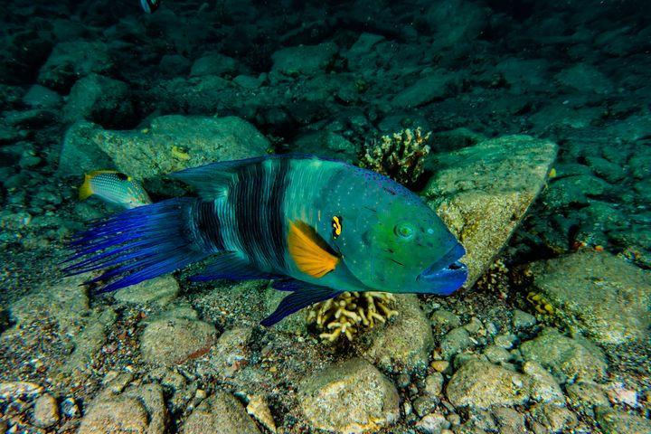 Amazing Fish swim in the Red Sea - photo land