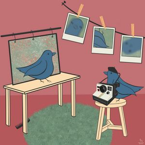 the birds do photography
