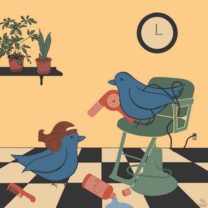 the birds go to the salon